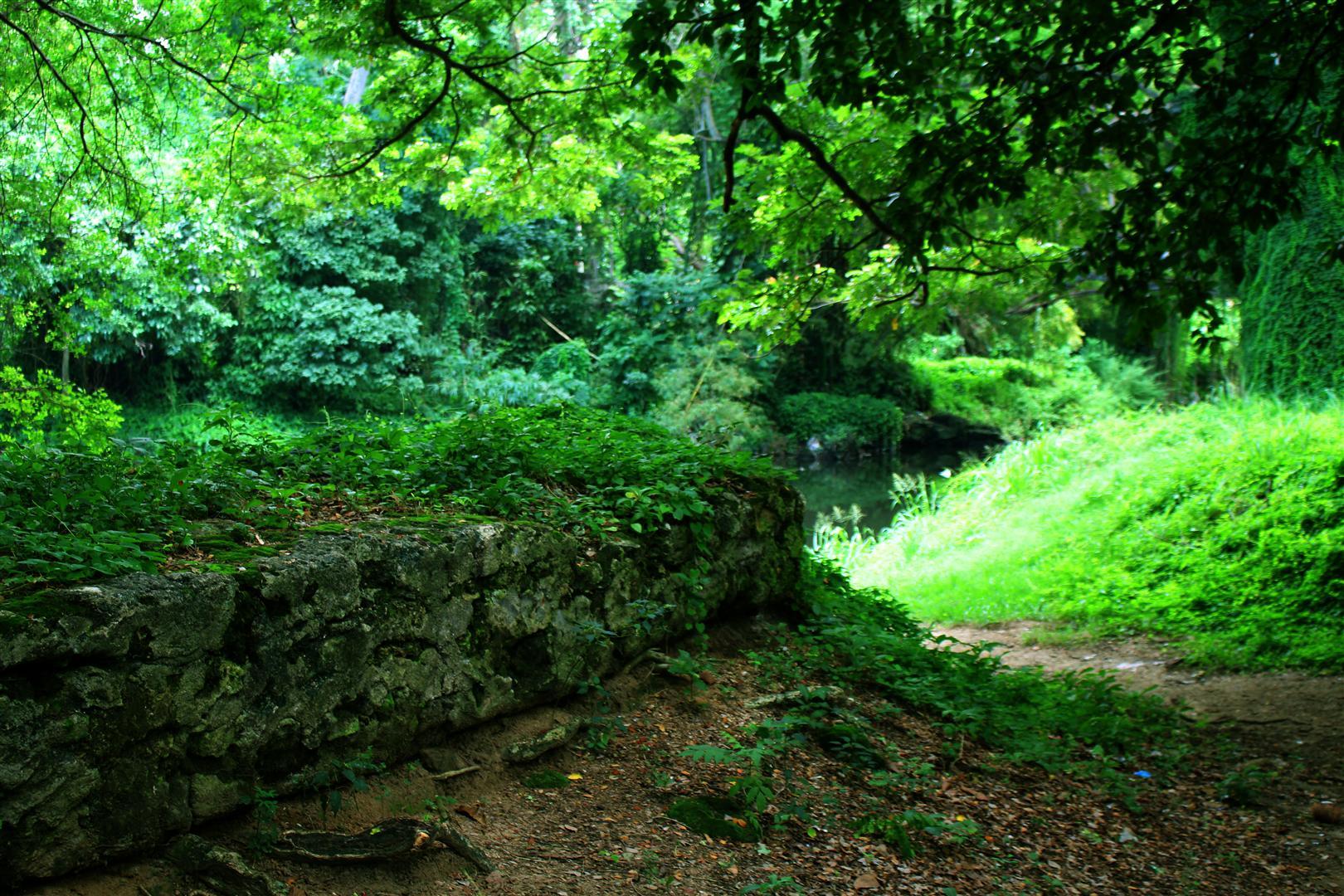 bosque habana 2