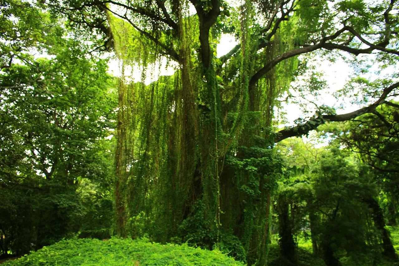 bosque habana 3