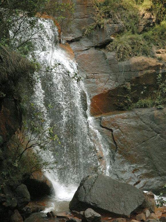 guayabo 2