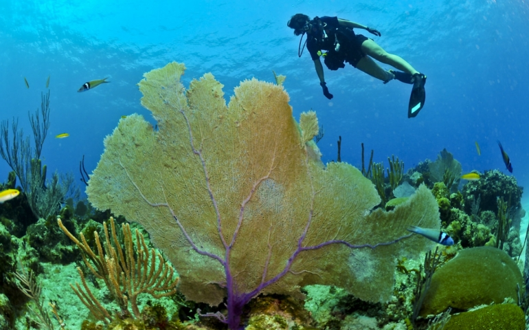Cayo Coco buceo